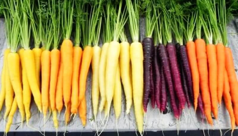istoria morcovului leviathan.ro