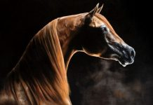 calul de florentina loredana dalian