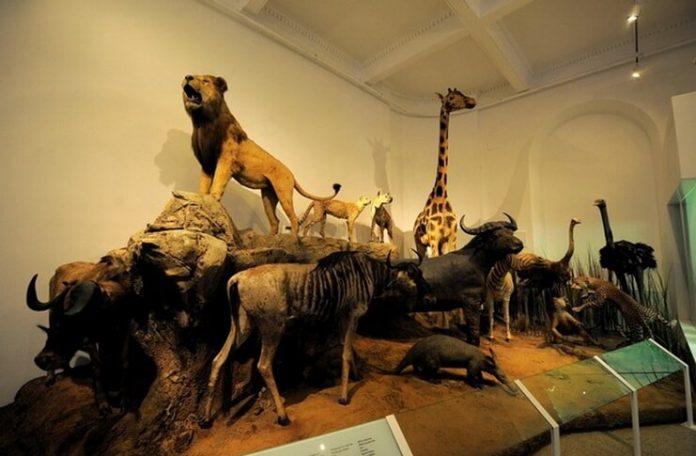 """Muzeul-""""Grigore-Antipa"""""""