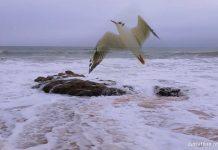 dori lederer pescarus ocean rubrica leviathan.ro
