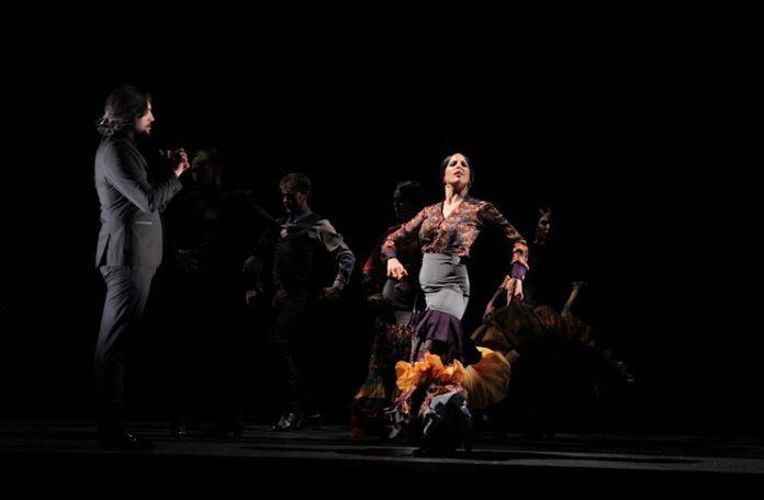 """""""Cel mai bun flamenco"""". Fotografie de Maria Ștefanescu"""